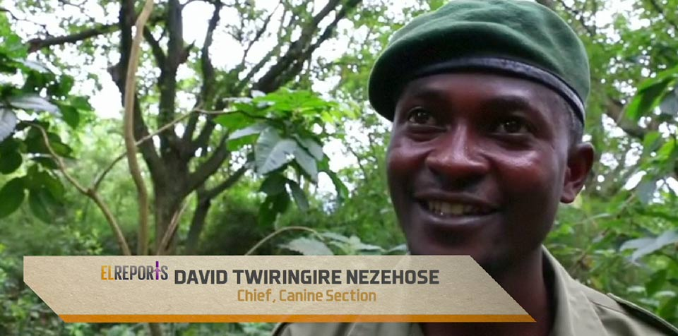DRC'S Virunga Park tackles poaching with the help of bloodhounds