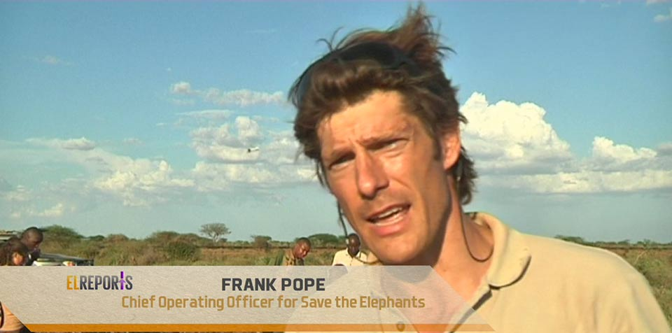 Frank Pope Elephant collaring to monitor impact of new railway on wildlife movement