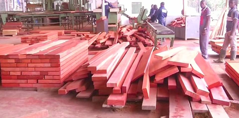Gabon looks to wood sector to diversify oil-reliant economy